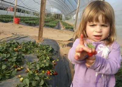 ילדי הגן קוטפים תותים ברוח שתות
