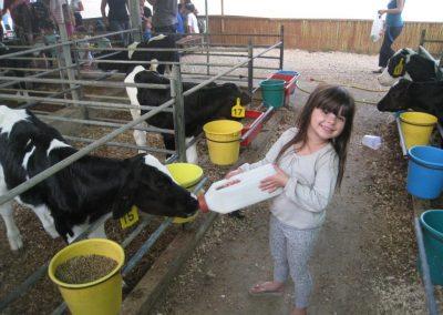 ביקור בחוות החלב